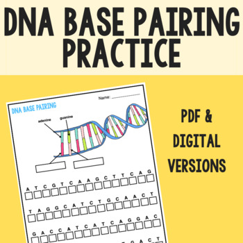 DNA Matching Base Pairs