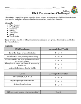 DNA Model Activity