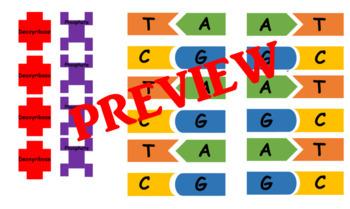 DNA Model Manipulative
