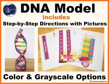 DNA Model with Step-by-Step Directions