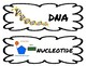 DNA & Modern Genetics -Science Vocabulary Cards- Science Word Wall - FUSION