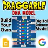 DNA Molecule - Digital Draggable Science Model
