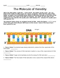 DNA: Molecule of Heredity
