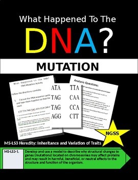 DNA Mutation Activity: What Happened to the DNA?