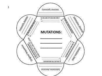 DNA Mutations Foldable