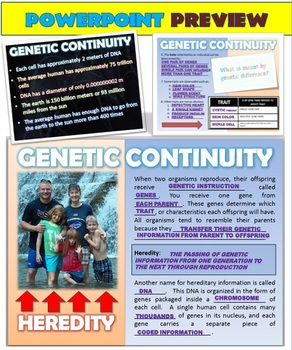DNA, Mutations, Protein Synthesis & Genetic Disorders: Interactive PowerPoint