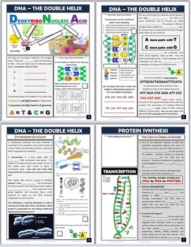 DNA, Mutations, Protein Synthesis, & Genetic Engineering: Engaging Note Packet