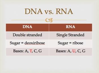 DNA Notes Bundle