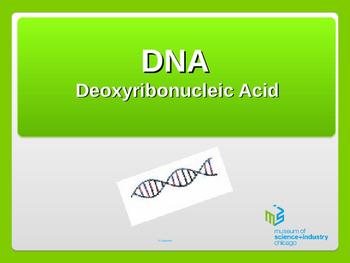 DNA PPT
