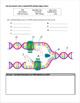 DNA  Practice
