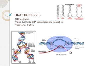 DNA Processes: DNA Replication, DNA Transcription, DNA Translation Power Point