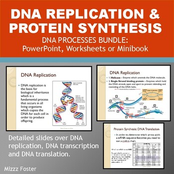 DNA Processes Bundle: DNA Replication and Protein Synthesis: Ppt and Worksheets