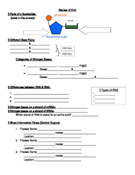 DNA & Protein Synthesis Review