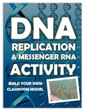 DNA REPLICATION AND MESSENGER RNA - BUILDING YOUR OWN MODEL