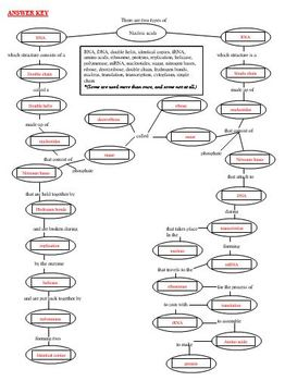 DNA & RNA Concept Map by Latham's Science Stuff | TpT Dna Concept Map on