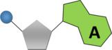 DNA & RNA Nucleotide Base Graphics