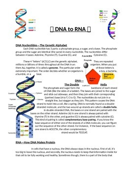 DNA, RNA, Protein Synthesis, & Genetic Mutations