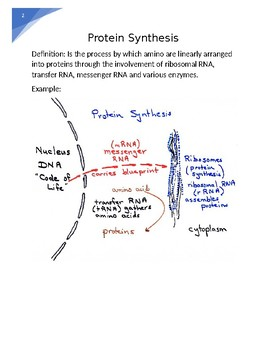 DNA,RNA, Protein Synthesis word wall