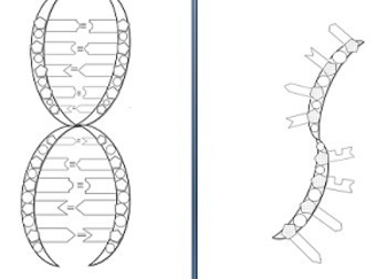 dna structure coloring pages-#23