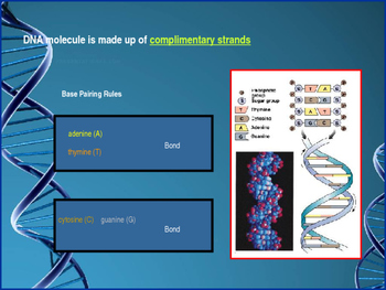 DNA, RNA and Protein Synthesis