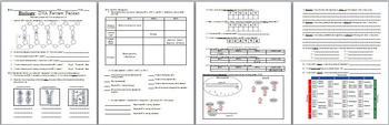 DNA, Transcription, Translation Review Packet