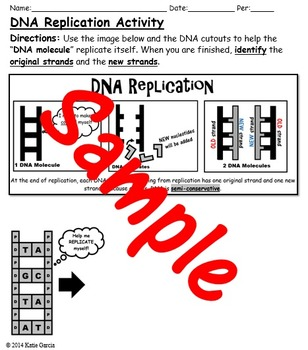 DNA Replication Activity