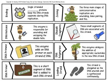DNA Replication Detective's Matching Review Bundle