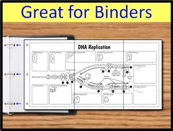 Dna replication foldable big foldable for interactive notebooks or dna replication foldable big foldable for interactive notebooks or binders ccuart Gallery