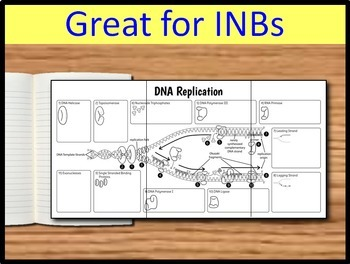 DNA Replication Foldable - Big Foldable for Interactive Notebooks or Binders