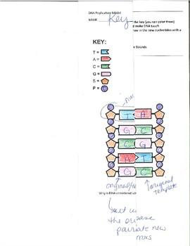 DNA Replication Folding Model w Key