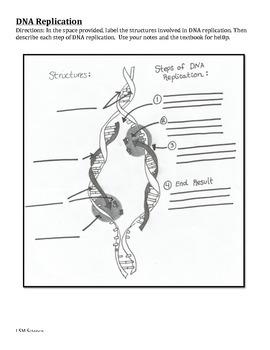 DNA Replication Graphic Organizer