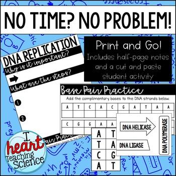 DNA Replication Interactive Notebook Activity