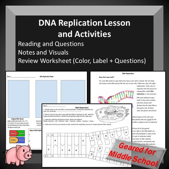 DNA Replication Lesson - Teacher Guide, Reading w/ Questions, Notes, + W/S