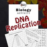 DNA Replication Models - Building Complementary Strands Si