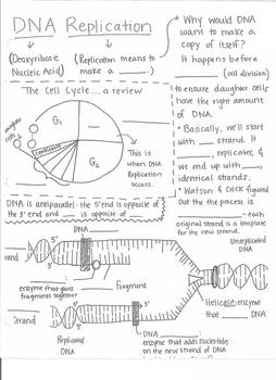 DNA Replication One Sheet Wonder