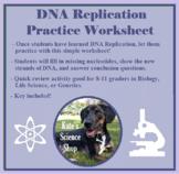 DNA Replication Practice Worksheet