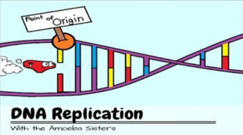 DNA Replication Recap Answer Key by The Amoeba Sisters- Amoeba Sisters Key