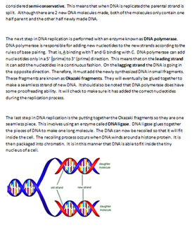DNA Replication Study Guide