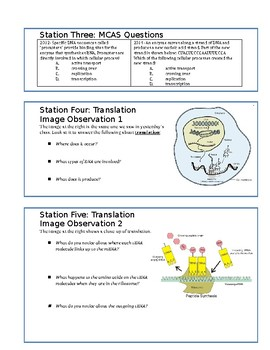 DNA Replication, Transcription, Translation Review Packet