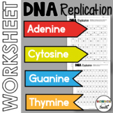 DNA Replication Worksheet Printable to Use for Review or Assessment