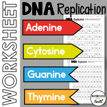 DNA Replication Worksheet Printable to Use for Review or A