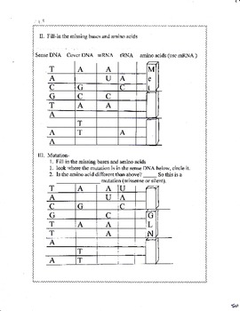 DNA, Replication and Protein Synthesis worksheet/test packet by Biology Buff