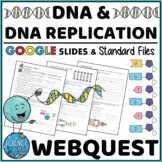 DNA and DNA Replication Webquest - Digital and Printable