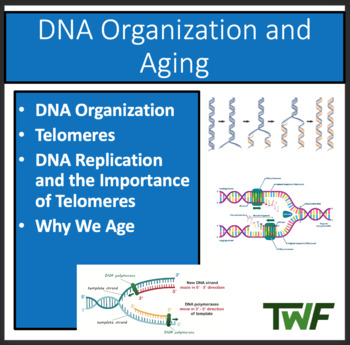 DNA Organization and Aging - A Senior Biology PowerPoint Lesson & Notes