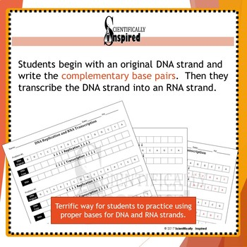 DNA Replication and Transcription Worksheet - Practice Base Pairing