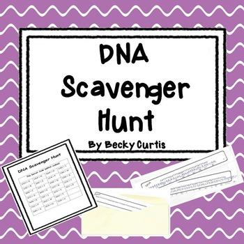 DNA Transcription & Translation Scavenger Hunt