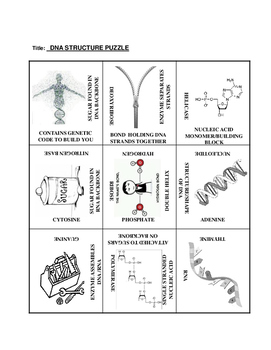 DNA Structure: 9 Square Puzzle Card Sort EASY