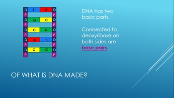 DNA Structure Animated PowerPoint