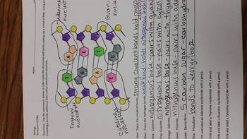 DNA Structure Color Code Review