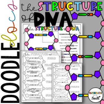 DNA Structure Coloring to Use in Interactive Notebooks and More